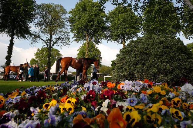 Windsor races 9.jpg
